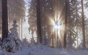 Picture winter, forest, the sun, rays, snow, trees, fog