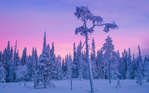 Picture winter, forest, snow, trees, Finland, polar night