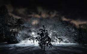 Picture winter, night, nature