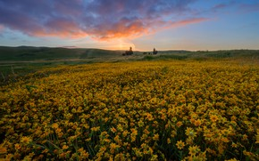 Picture field, summer, the sky, flowers, hills, yellow
