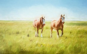 Picture field, horses, horse, art, pair, painting, photoart, two knights