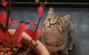 Picture cat, look, kitty, plant