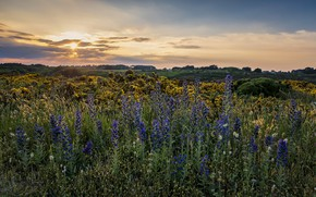 Picture sunset, flowers, nature, Pascal Lechaudel