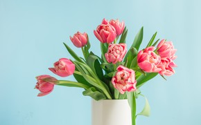 Picture table, background, blue, bouquet, tulips, vase, gentle