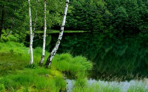 Picture greens, forest, lake, shore, vegetation