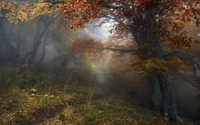 Picture autumn, forest, trees, landscape, nature, fog, path, Алексей Милокост