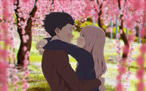 Picture petals, sakkura, You no katachi, form voice, Spreading ISIS, Shoko Nishimiya