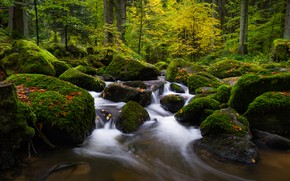 Picture autumn, forest, leaves, trees, stream, stones, moss, Germany, Otter Creek