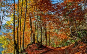 Picture road, autumn, forest, trees, Italy
