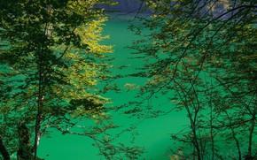 Picture lake, Germany, Bayern, Königssee