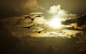 Picture the sky, the sun, light, flight, sunset, birds, three, trio, pelicans