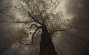 Picture birds, fog, tree, Armenia