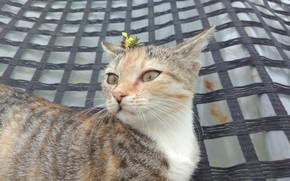 Picture kitty, kitty, Meduzanol ©