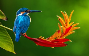 Picture flower, nature, tropics, bird, stem, Kingfisher