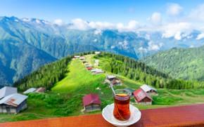 Picture tea, turkey, Rize, Pokut Pleteau