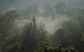 Picture forest, Amazon, BBC, South America, nature