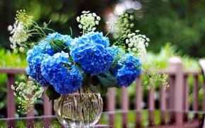 Picture flowers, bouquet, vase, bokeh, hydrangea