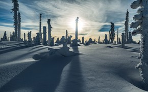 Picture winter, frost, the sun, light, snow, trees, posts, slope, the snow, shadows, stumps, snowy, ebo