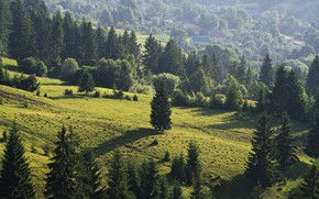 Picture Meadows, Trees, The slopes, Grass, .Forest
