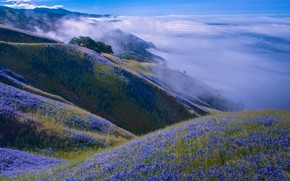 Picture clouds, landscape, flowers, mountains, nature, hills, CA, USA, meadows