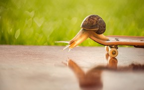 Picture summer, look, macro, pose, reflection, mood, sport, snail, track, green background, riding, bokeh, skateboard
