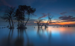 Picture trees, Indonesia, Bay, glow
