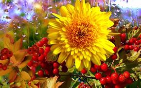 Picture flower, rain, berry, still life, Kalina
