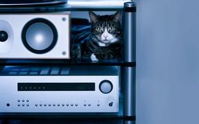 Picture cat, cat, look, comfort, house, music, grey, background, blue, technique, dynamics, shelf, lies, striped, mordaha, …