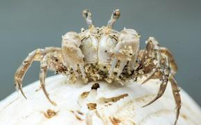 Picture background, crab, crab