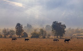 Picture loshadki, morning, mountains, horse, horses, stack, field, hills, autumn, forest, light, nature, fog, pasture, trees, …