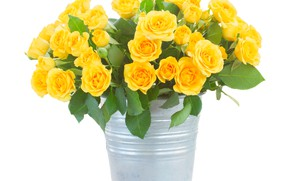 Picture flowers, roses, bouquet, yellow, bucket, white background