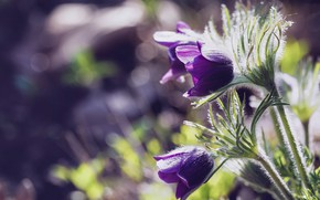 Picture flowers, spring, purple, lilac, bokeh, forest, cross