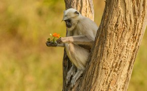Picture flowers, tree, monkey, sitting