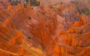 Picture sand, the sun, trees, stones, rocks, canyon, USA, the view from the top, Cedar Breaks …
