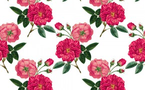 Picture background, roses, buds, twigs
