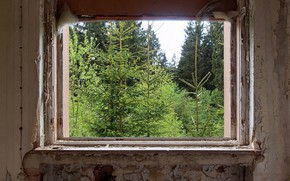 Wallpaper forest, room, window
