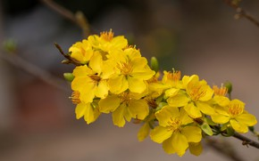 Picture flowers, background, branch, spring, yellow, flowering
