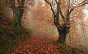 Picture autumn, forest, trees, fog, Spain, Spain, fallen leaves, Navarre, Navarre, Baztan, Bastan