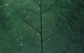 Picture Macro, Sheet, Color, Plant, Plants, Color, Flora, Plants, Close-up, Flora, Plant, Markus Spiske, Markus Spiske …