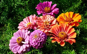 Wallpaper Flowers, bouquet, weed, Zinnia