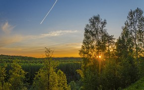 Picture forest, summer, the sun, rays, landscape, nature, morning