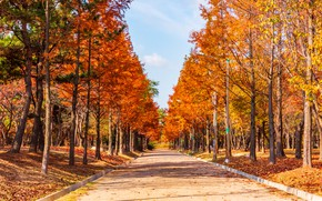 Picture road, autumn, leaves, trees, Park, road, nature, park, autumn, leaves, tree