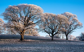 Picture frost, trees, morning