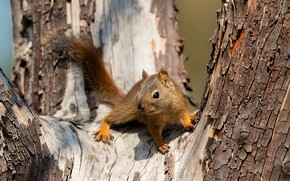 Picture look, light, pose, tree, legs, protein, muzzle, bark, squirrel