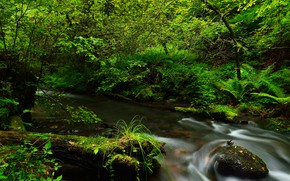 Picture greens, forest, stream, stones, moss, the bushes