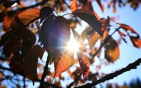 Picture Tree, Sun, Autumn, Mood