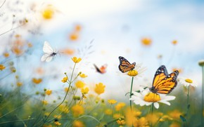Picture summer, macro, butterfly, flowers, chamomile, buttercups