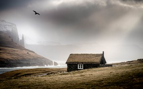 Picture sea, fog, house, bird, shore, Iceland