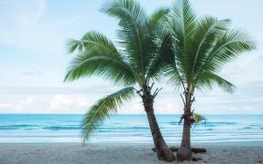 Picture sand, sea, beach, summer, palm trees, summer, beach, sea, sand, paradise, palms, tropical
