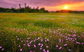 Picture field, summer, the sky, grass, the sun, rays, light, sunset, flowers, the city, glade, building, …
